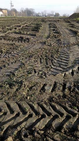 Pole po kopaniu buraków