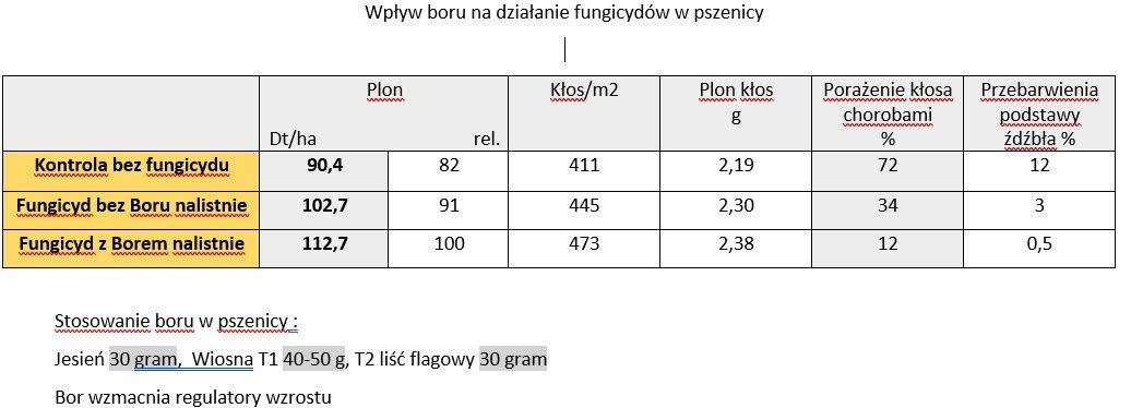 large.5a57661202887_Wpywborunadzianiefungicydw.jpg.1f96dc7e8012f29c2544a965e46c23d8.jpg