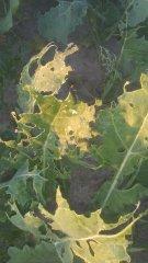Uprawy jacus09352